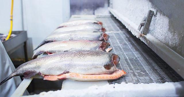 Пример холодоснабжения рыбоперерабатывающих предприятий